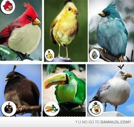 Ha!: Funny Pics, Real Life, The Real, Funny Pictures, Life Angry, Funny Stuff, Real Angry, Angry Birds, Real Birds