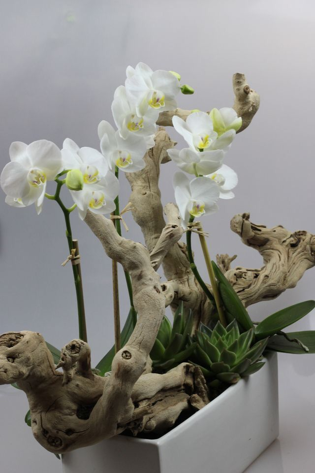 Pretty white orchids