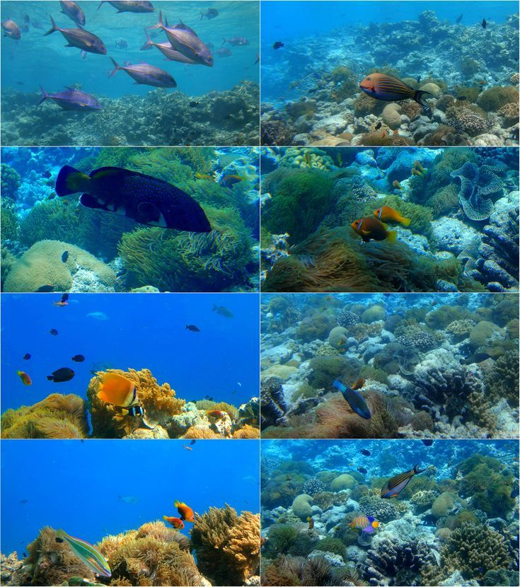 Under the sea or Lunch in Mr. Jacques Cousteau's world