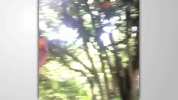 Harris Wittels on Vine on Vimeo