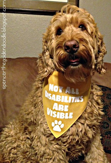 """Not All Disabilities Are Visible""  Learn more about The Lola Project and the benefits of Psychiatric Service Dogs by clicking on the photo."