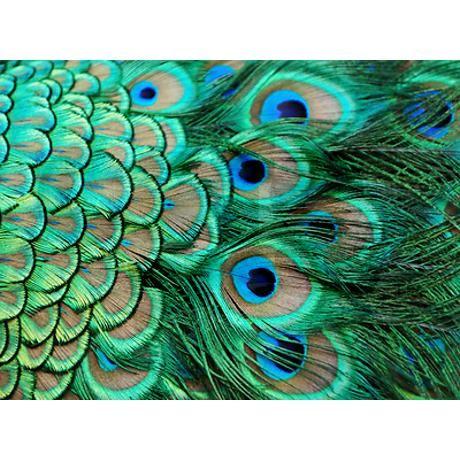 Peacock Feather 5 X7 Area Rug Bourgeois Pinterest