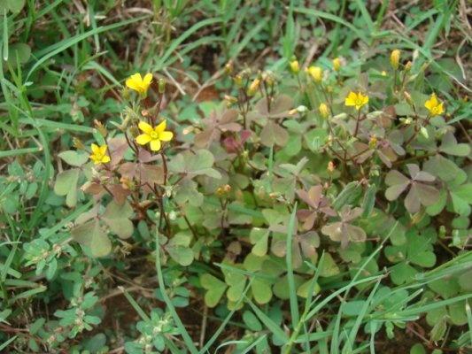 Best Way To Prevent Weeds In Flower Beds