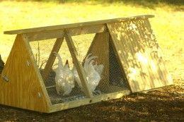 Chicken Tractors; Free Range Chickens Safely!