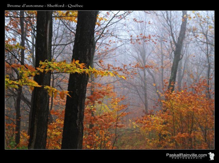 Brume d'automne Prise au mont Shefford, Québec, Canada http://www.paskalrainville.com/