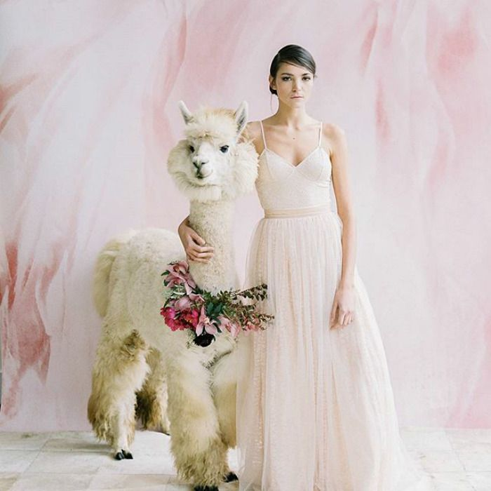If You Hate People Invite Llamas In Bowties To Your Wedding Instead - If you hate humans you can now invite llamas to your wedding instead