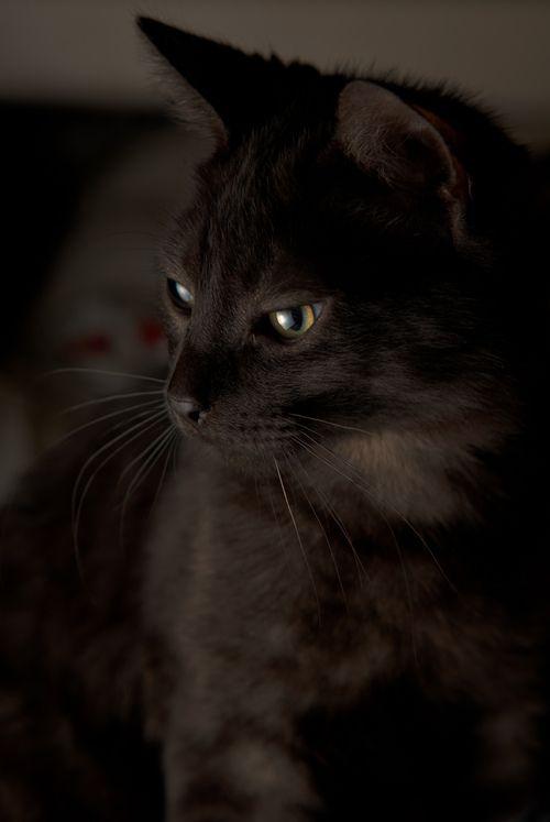 What a beautiful black cat!