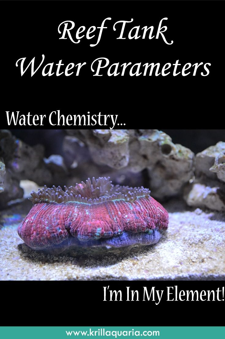 17 best images about saltwater aquariums on pinterest for Starting a saltwater fish tank