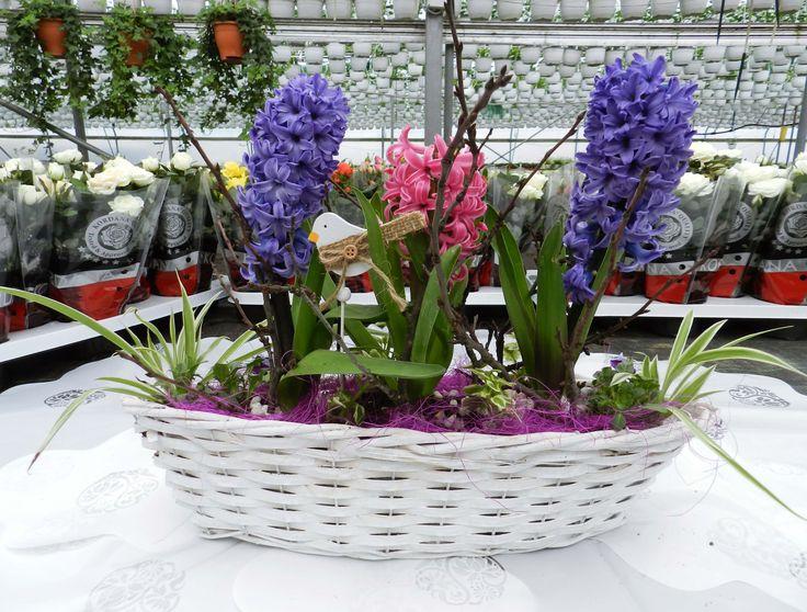 www.oleander.ro