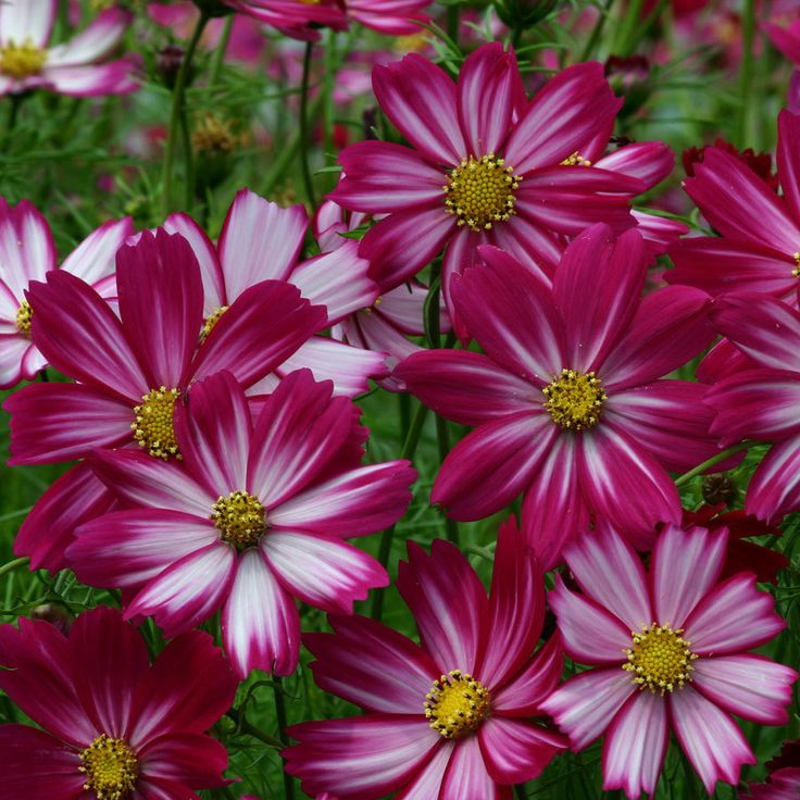 95 Best Flowers In Bloom August And September Images On 400 x 300