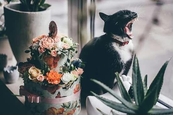 koci dzień #love#Cat#kot#kwiaciarnia#kwiaciarnia szczecin #prezenty #kwiaty