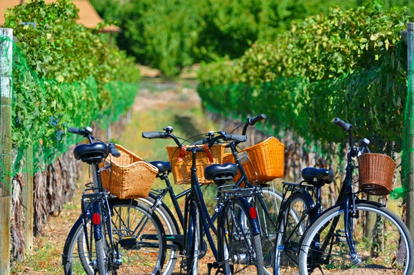Palisade Wine Country Tours