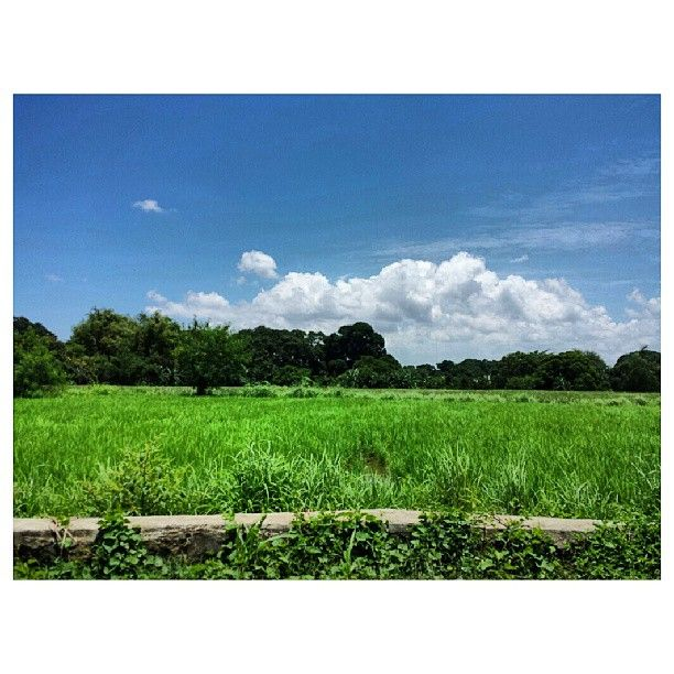 #ricefield #green #bluesky #sky #clouds #philippines #田んぼ #青空 #空 #雲 #フィリピン