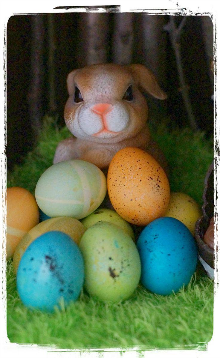 Rabit easter. Happy Easter