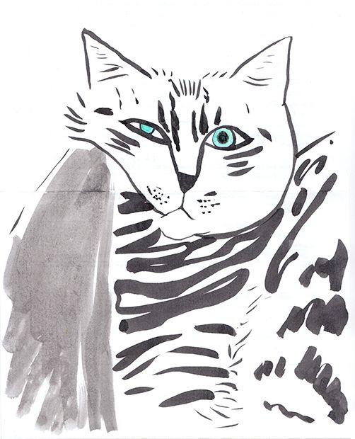 Cat of Sari_sopp from instagram. I like the picture of her cat and draw it :)