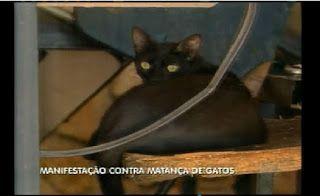 """""""O GRITO DO BICHO"""": ONG faz manifesto contra matança de gatos na UFMG"""