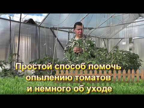 Простой способ помочь опылению томатов и немного об уходе - YouTube