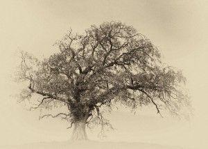 Matthew Gammon - Arterial Tree www.sofinearteditions.com/matthew-gammon/