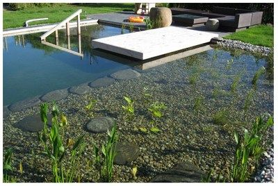 Natural Swimming Pools – backyard pool without the chemicals. | The Red Ferret Journal
