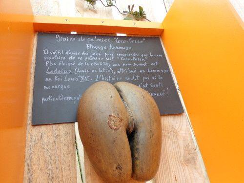 Graine de Palmier Coco Fesse I Calendrier des 7 lunes I Design by RCP Design Global