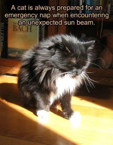 always,cat,caption,emergency,prepared,sunbeam,nap