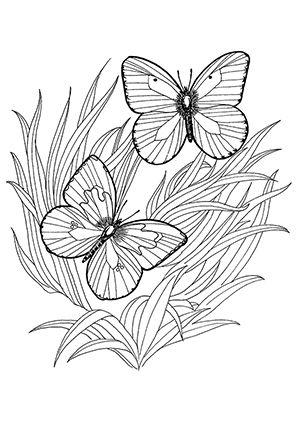Ausmalbild Zwei Schmetterlinge im Grass zum kostenlosen