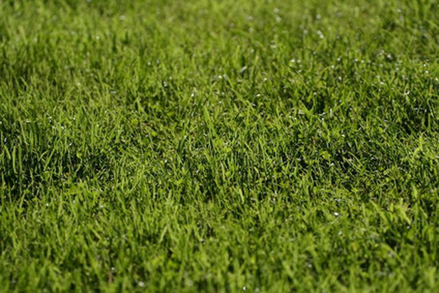 How To Seed Fertilize Your Lawn In The Spring Growing Grass