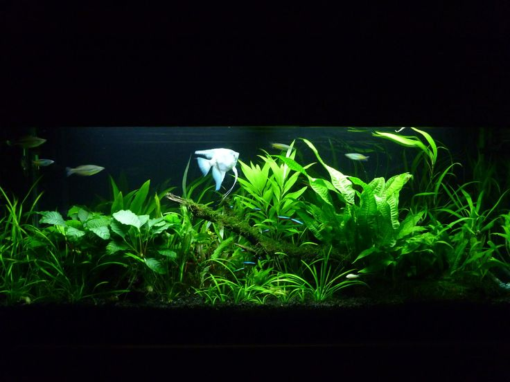 Low Tech Tank Show-and-Tell (low tech can be lush, too! =) - Page 47 - The…