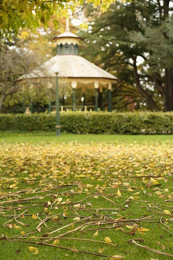 machattie park gazebo and fallen leaves Bathurst .. more on the blog http://destinationhereandnow.com/2015/04/as-you-walk/  #bathurst #autumn #autumncolour #autumncolor