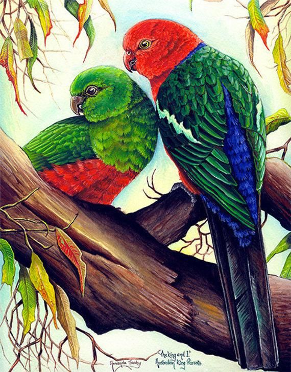 The King And I King Parrots Bird Watercolor Art Wildlife Art Birds Painting