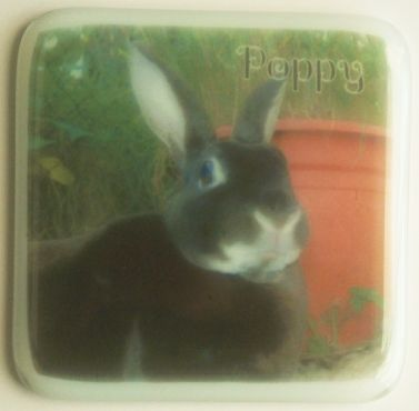 Poppy a pet rabbit in the garden.  Photograph provided by the client.