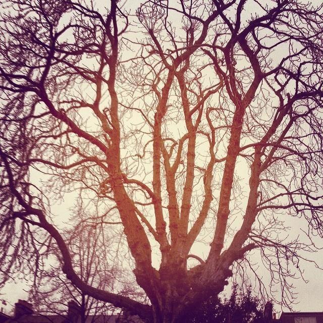 Friday's #treeoflaxmi woos the sun. 7.58am, Feb 14, 2014.
