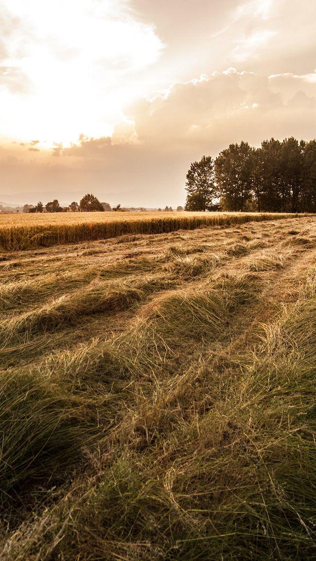 مزرعة قمح الحقل خلفية الريفية Landscape Photo Ireland Landscape