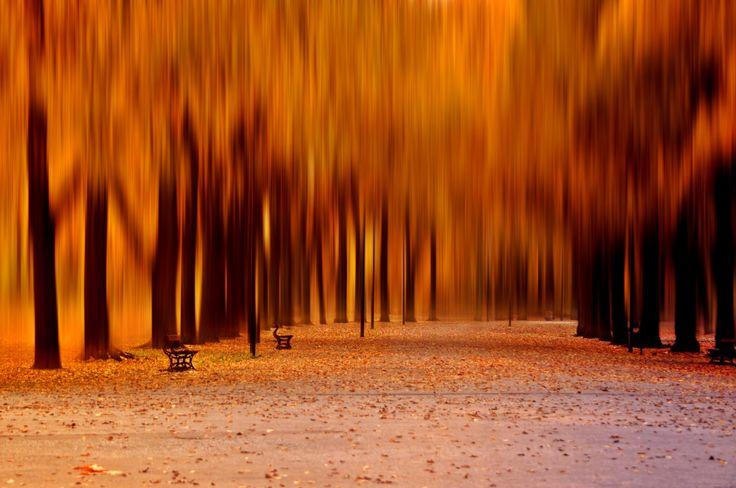 just autumn....autumn walk - null
