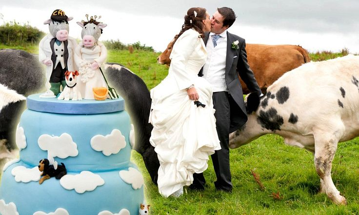 I moo: Cow-themed wedding sees bride (wearing white wellies) arrive on a tractor, portraits with a herd of cattle and roast beef for dinner #DailyMail