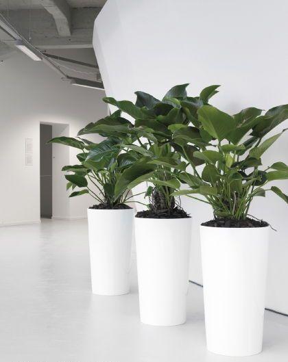 35 Best Indoor Plant Hire Images On Pinterest Indoor 400 x 300
