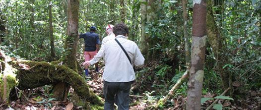 kalimantan  orangutan trekking and jungle camping