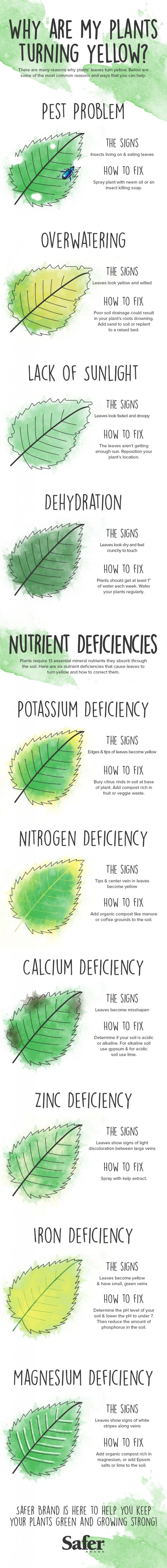 Why Are My Plants Turning Yellow? #Infographic #infografía