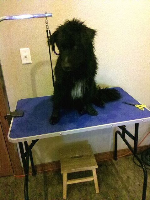 343 best Dog Grooming images on Pinterest | For the, Head to and ...