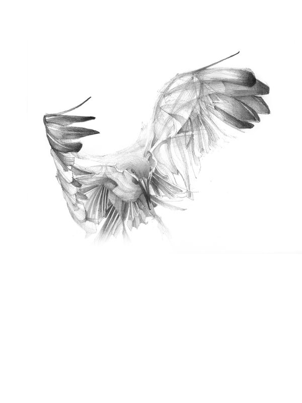 Zbor / Flight by Andrei Nicolescu, via Behance
