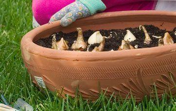 10 gode råd om blomsterløg i haven
