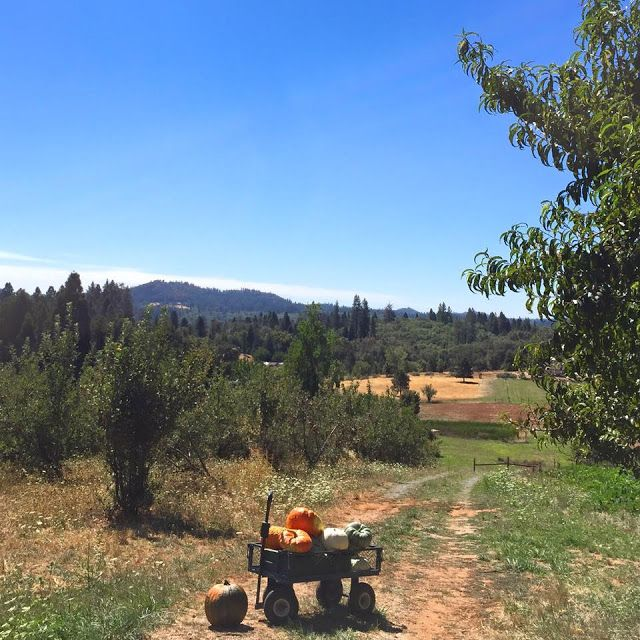 Weekend View -  Happy weekend.         Labor Day weekend is a long weekend that…