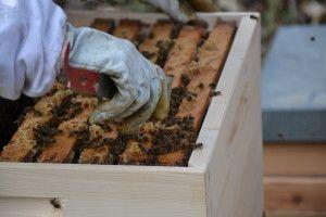 #Bienen, #Honig  ©Foto: Sofia Delgado