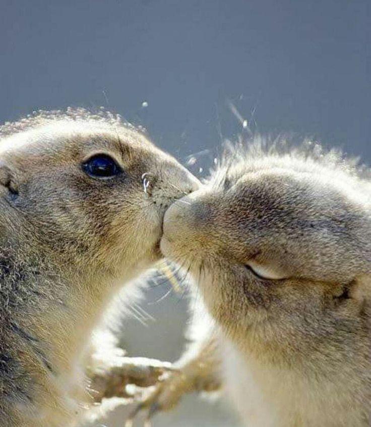 зайчики целуются фото швеции