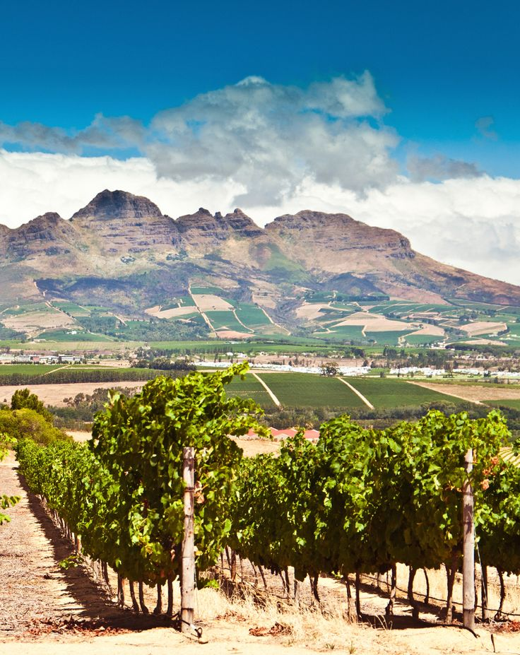 The wine region of Stellenbosch, #CapeTown #SouthAfrica #jetsettering