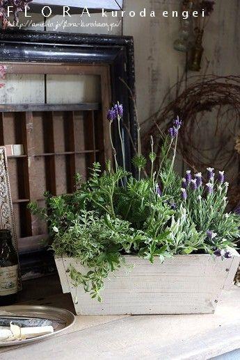フローラのガーデニング・園芸作業日記-ラベンダー ハーブ 寄せ植え