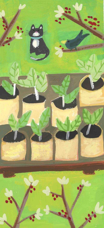 Kay Widdowson - Seedlings