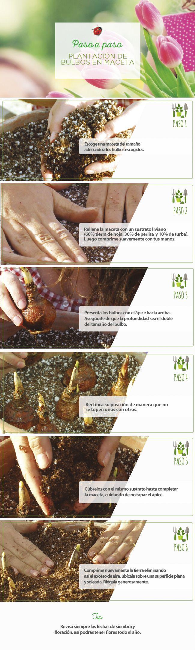 #Plantación #Bulbos #Maceta #Easy #jardín