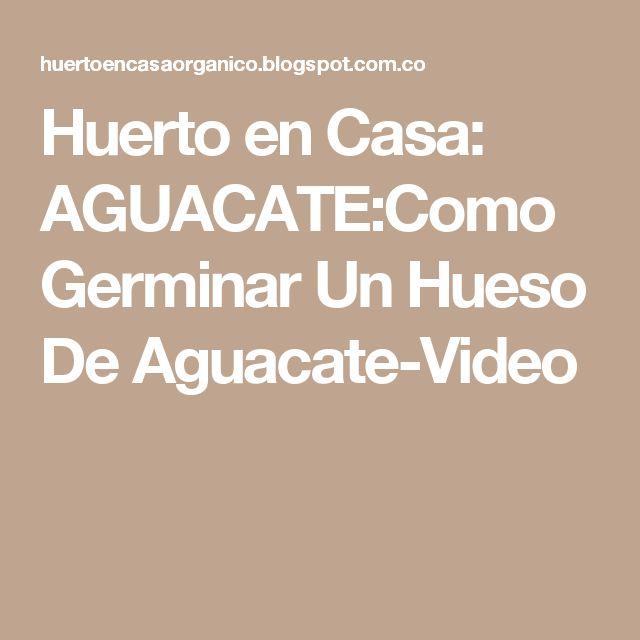 Huerto en Casa: AGUACATE:Como Germinar Un Hueso De Aguacate-Video