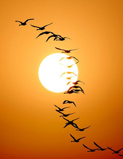 Migrant birds fly over the Poyang Lake in east China's Jiangxi province  Photograph: Fu Jianbin/Corbis